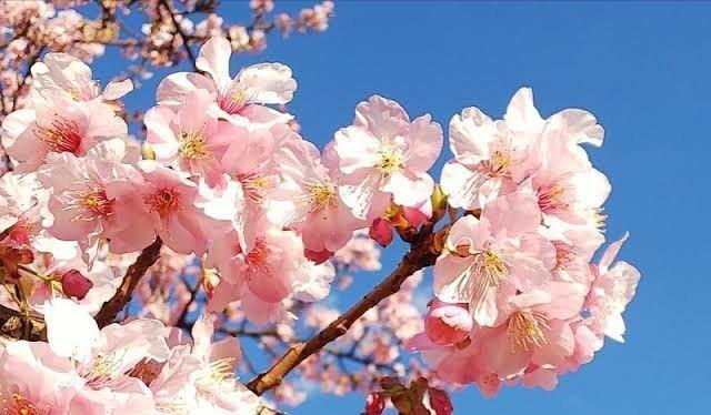 「*お花見*」03/26(03/26) 09:32 | ゆめかの写メ・風俗動画