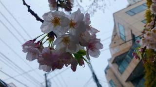 「☃❄」03/29(03/29) 10:00 | ひまりの写メ・風俗動画