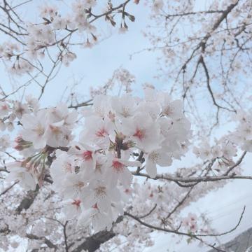 「?」03/31(03/31) 19:39 | 体験ひかり☆完全未経験☆現役学生の写メ・風俗動画