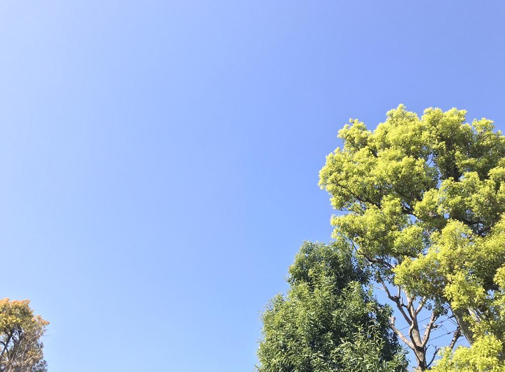 「これから出勤します♪」04/02(04/02) 09:35   百合の写メ・風俗動画