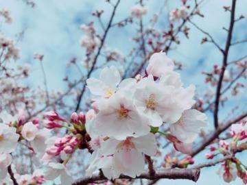 「出勤です」04/02(04/02) 17:39 | 和泉 さらさの写メ・風俗動画