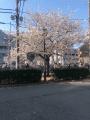 麻美-あさみ|熟女10,000円デリヘル