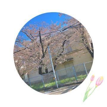 「[お題]from:風俗学者さん」04/09(04/09) 13:01 | 五月ななの写メ・風俗動画