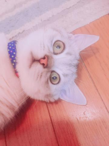 「私のペット」09/26(09/26) 15:49   ましろの写メ・風俗動画