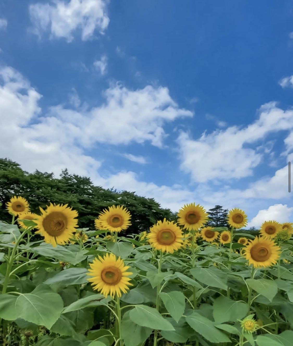 つくし|日本橋・千日前風俗の最新写メ日記