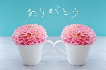 中原愛子 西船橋風俗の最新写メ日記