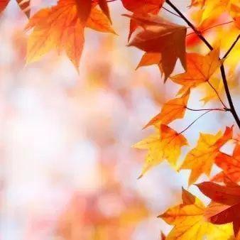 「深まる秋。。」09/26(09/26) 12:20 | 椿優奈の写メ・風俗動画