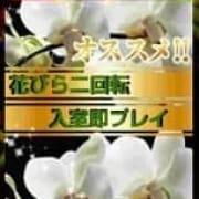 「興奮度マックス!花びら二回転即プレイ」11/20(火) 00:00 | クラブ高蘭のお得なニュース